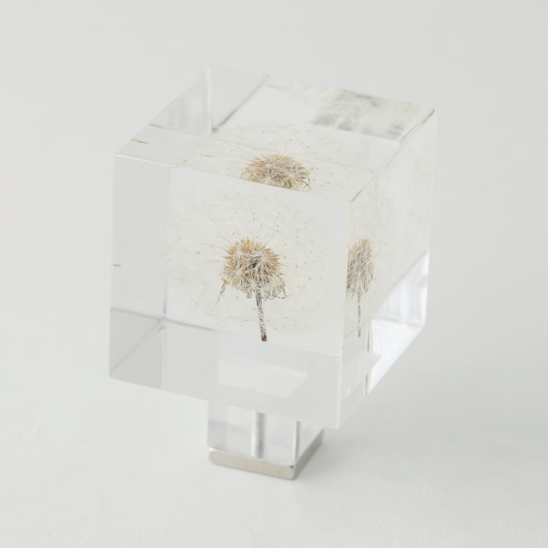 Sola cube/Magnet タンポポ